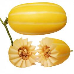 Korean Melon / 韩国黄金香瓜 - 2PC