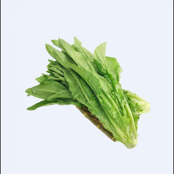 A-CHOY/ A菜(油麦菜)