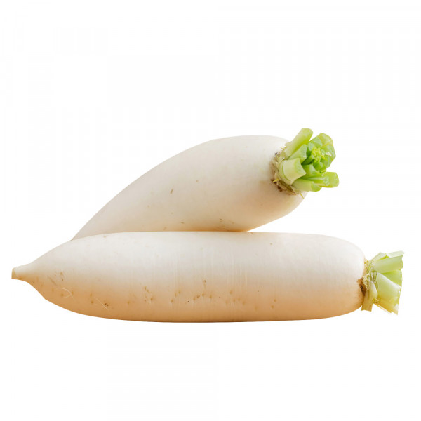 White Radish  /白萝卜- 1PCs