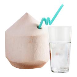 Coconut / 泰国水椰子 - 1PC