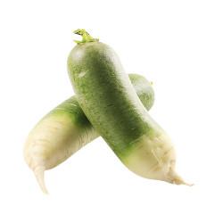 Green Radish/Lobok /青萝卜 - 2PCs
