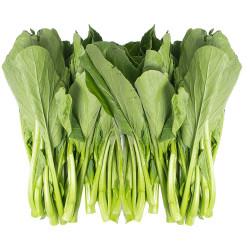 Yuchoy / 油菜~ 1.5lbs