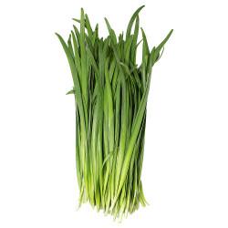 chives /  新鲜韭菜 ~ 1.5lbs