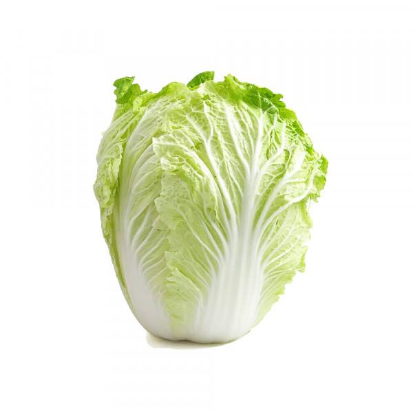Nappa Cabbage / 短绍菜 ~  2.5lbs