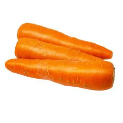 Carrots / 红萝卜 - 3PCs